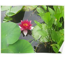 Hidden Among the Lillypads Poster