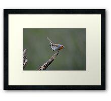 Robin Bird on a post ! Framed Print
