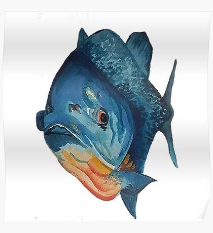 Piranha lurking, waterclour painting Poster
