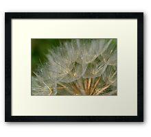 Macro shot of a Dandelion  Framed Print