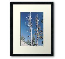 White Bark Framed Print
