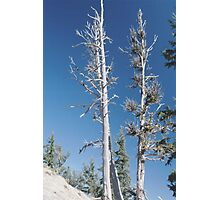 White Bark Photographic Print