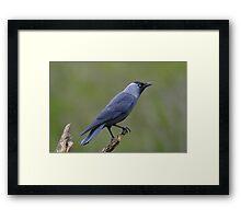 Raven on a post Framed Print