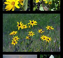 Shades of Yellow by katpix