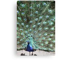 Bird of a Feather Canvas Print