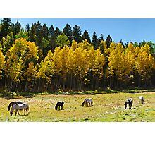 Autumn Pasture Photographic Print