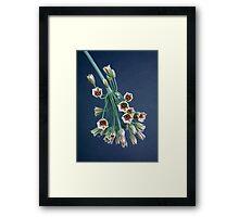 Allium bells Framed Print