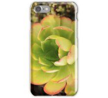Aeonium urbicum succulent iPhone Case/Skin