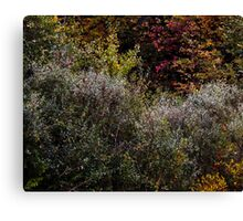 Abstract In Nature's Fall Canvas Print