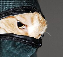 Ninja Cat by David Lee Thompson
