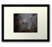 Milk Weed In the Morning Dew Framed Print