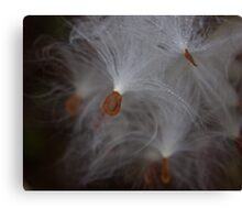 Milk Weed In the Morning Dew Canvas Print