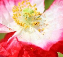 Pink Poppy Sticker