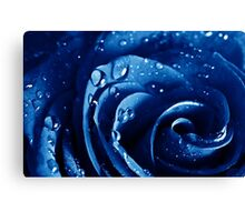 Beatiful Blue rose with water drops Canvas Print