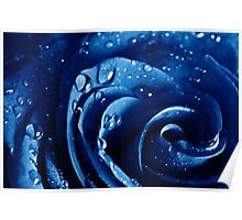 Beatiful Blue rose with water drops Poster