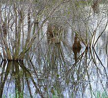 Pond Reflections by Rosalie Scanlon