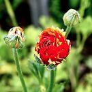 Bloom by Trish Peach