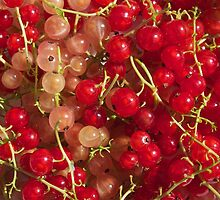New crop of red and white currant by Maryna Gumenyuk