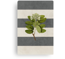botanical stripes 5 Canvas Print