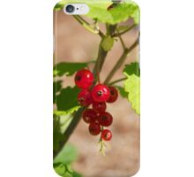 Red currant iPhone Case/Skin