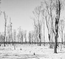 Lake Albacutya Track by Malcolm Katon