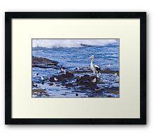 Pelican Boss Framed Print