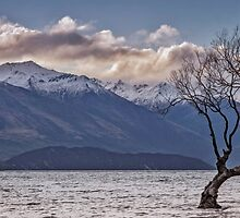 That Wanaka Tree by STEPHEN GEORGIOU