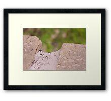Spider Threads Framed Print