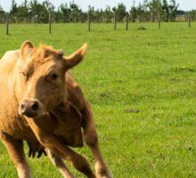 Dog herding cattle Sticker