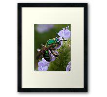 Green bee on flower Framed Print