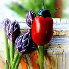 Pappelblattkäfer (Chrysomela populi) by ©The Creative  Minds