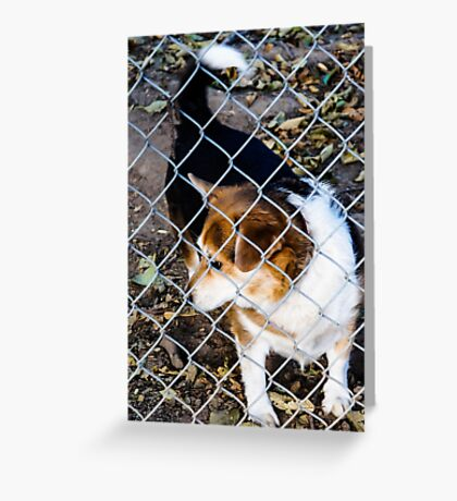 Behind the Fence Greeting Card