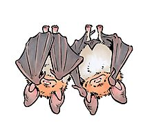 Greater mouse-eared bats Photographic Print