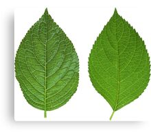 Two Sided Leaf Canvas Print
