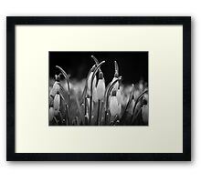 New beginnings and hope Framed Print