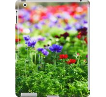 A field of cultivated colourful and vivid Anemone flowers. Photographed in Israel iPad Case/Skin
