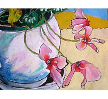 Jo's Cyclamen Photographic Print