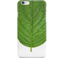 Simple Leaf iPhone Case/Skin