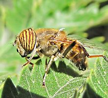 Bee mimic does yoga by Lee Jones