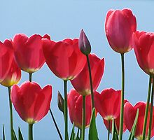 Tulips by Janet Gosselin