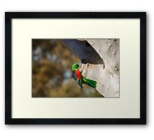 Red Winged Parrot Framed Print