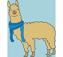 Llama wearing Scarfs Photographic Print