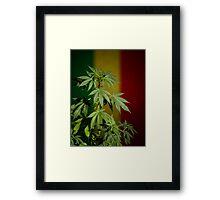 Marijuana on rastafarian flag Framed Print