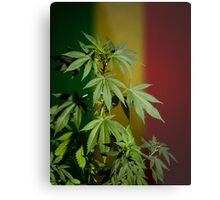 Marijuana on rastafarian flag Metal Print