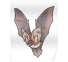 Grey long-eared bat Poster