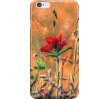 Indian Paint Brush at Sunset iPhone Case/Skin