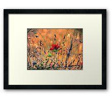 Indian Paint Brush at Sunset Framed Print