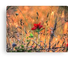 Indian Paint Brush at Sunset Canvas Print