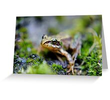 The baby frog. Greeting Card