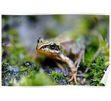 The baby frog. Poster